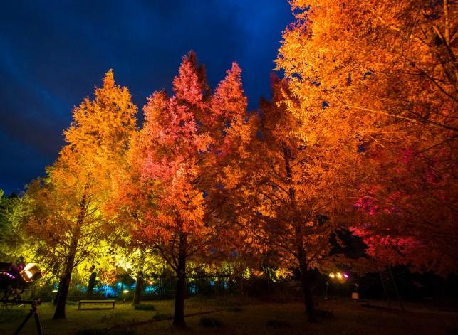 光のフェスタ in モネの庭